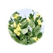 ローレルの花